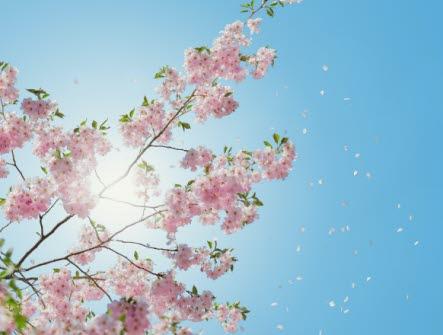 Blå himmel och sol på blomsterkvist