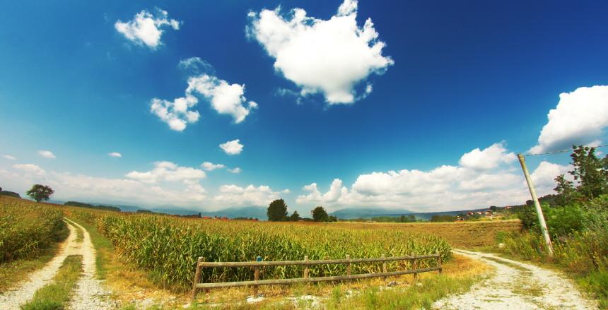 En sommarbild med äng, blå himmel, grusväg och havet som skymtar i horisonten.