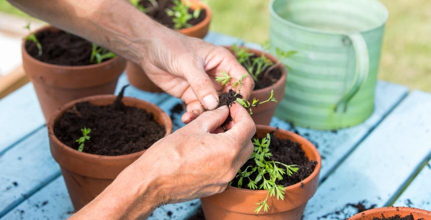 händer som planterar i krukor utomhus.